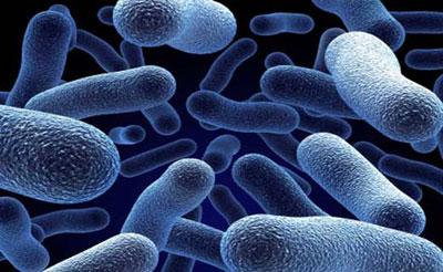 бактерии и вирусы как причина