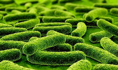 микобактерии туберкульоза