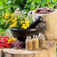Эффективные сборы и настои трав от бронхита